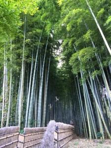 あだしの念仏寺の中の竹林